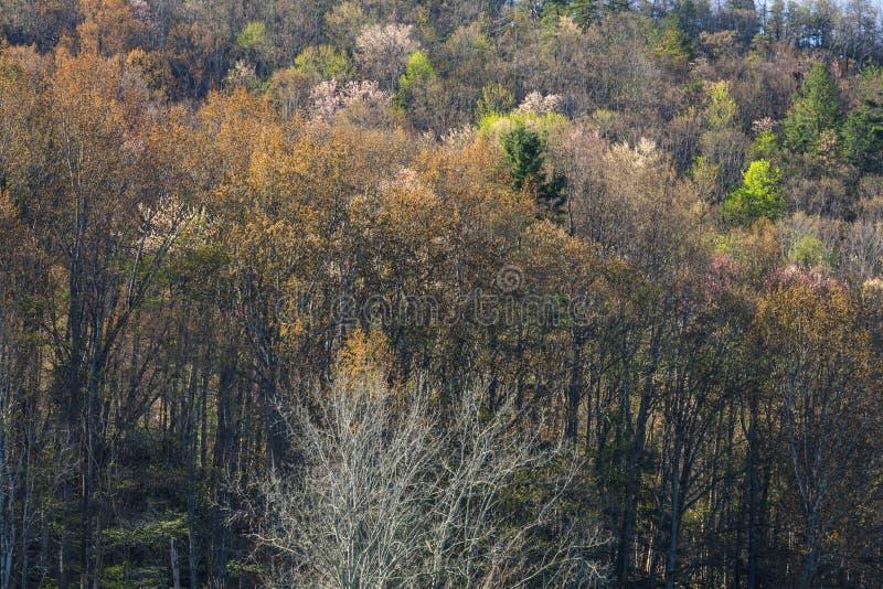 El follaje temprano de la primavera, lleva el valle, TN imagen de archivo