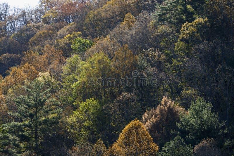 El follaje temprano de la primavera, lleva el valle, TN foto de archivo