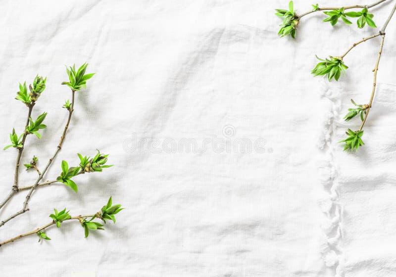 El fondo blanco con verde fresco deja ramas con el espacio de la copia Composición rústica del fondo del marco de la primavera co fotos de archivo