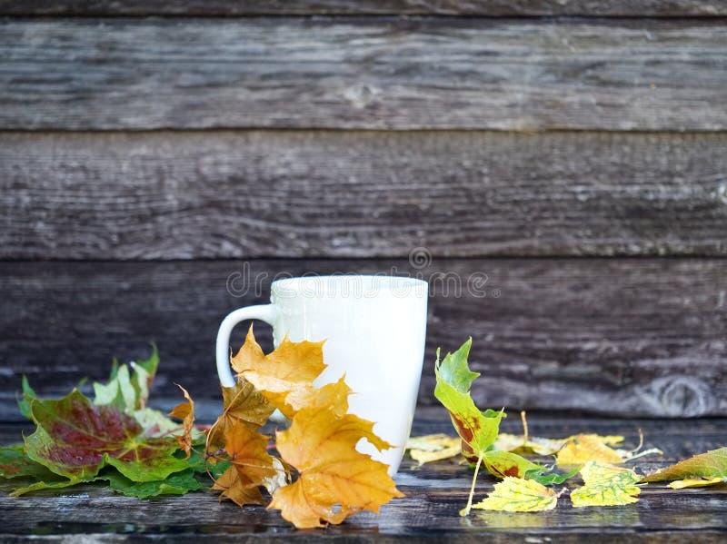 El fondo con las hojas secas, taza blanca del otoño con la bebida, lluvia cae en banco del marrón oscuro Copie el espacio, vista  fotografía de archivo libre de regalías