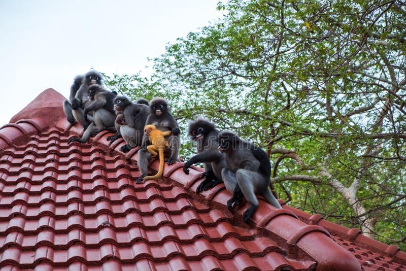 El fondo de la fauna con los monos y el mono del bebé en el tejado rematan Im fotografía de archivo libre de regalías