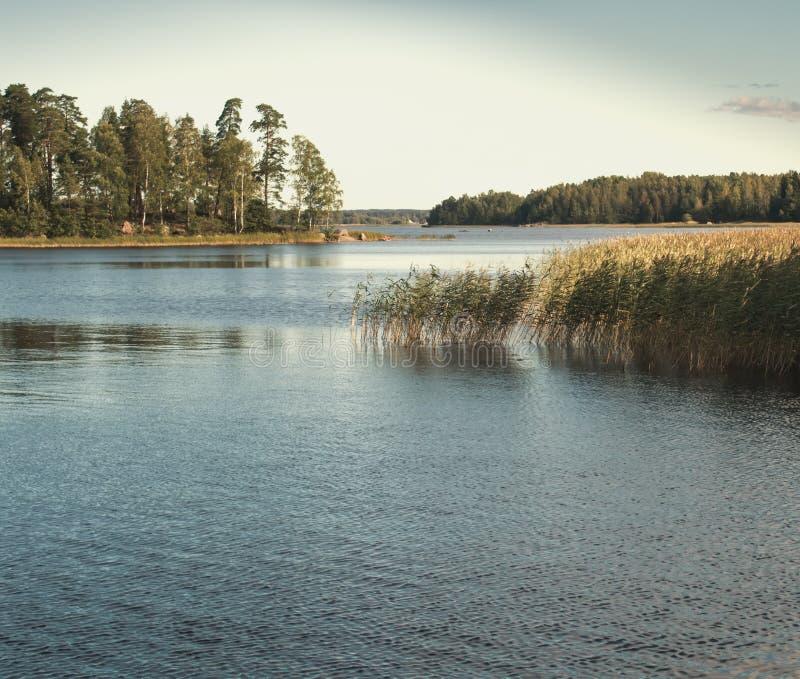 El Fondo De La Naturaleza Con La Caña Costera Y El Lago Brillante ...