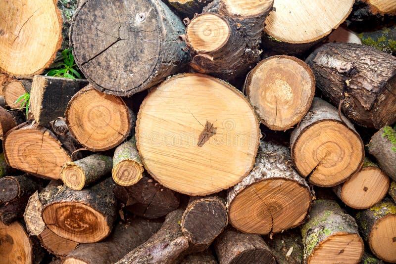 El fondo de la textura del primer de los registros de madera redonda con diversos árboles de pino clasifica los diámetros almacen fotos de archivo libres de regalías