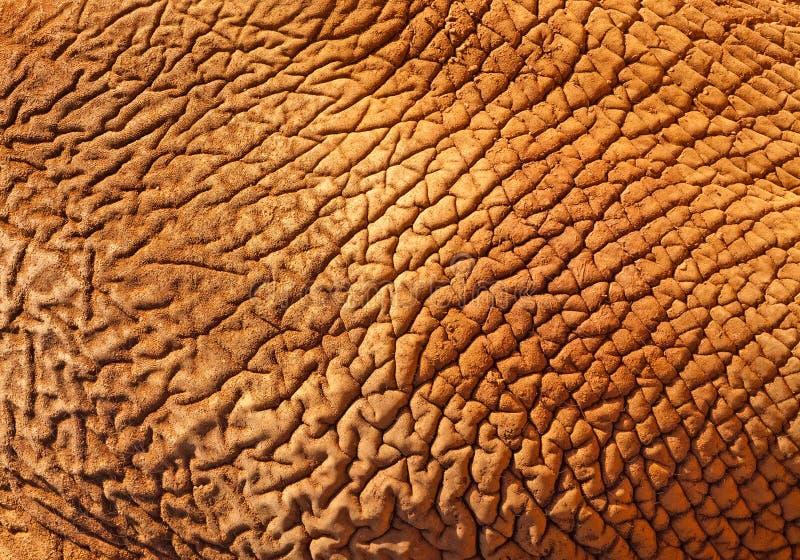 El fondo de la textura de la piel del elefante africano imagen de archivo libre de regalías