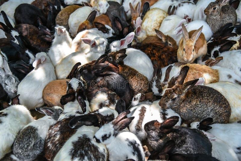 El fondo de la visión superior de los conejos del grupo está comiendo la comida imágenes de archivo libres de regalías