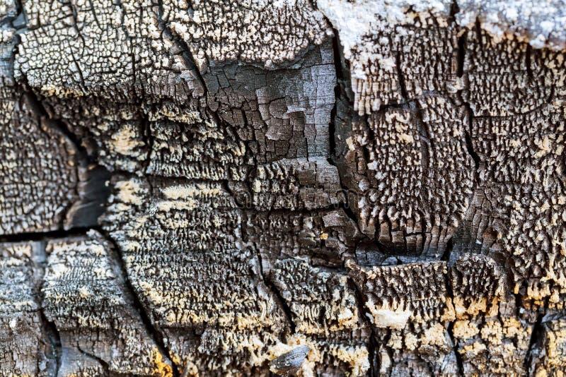 El fondo de madera chamuscado fotografía de archivo
