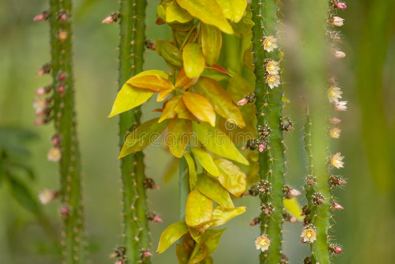 El fondo de troncos, de agujas, de hojas y del cactus florece fotografía de archivo