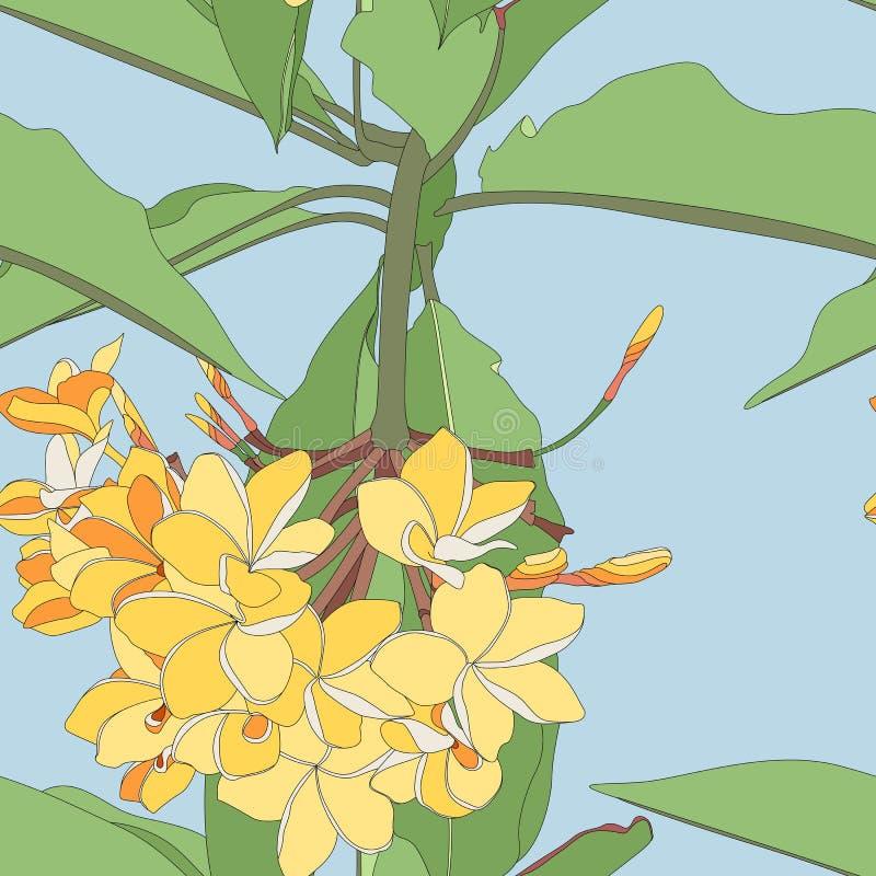 El fondo incons?til del modelo del verano floral tropical con plumeria florece con las hojas ilustración del vector