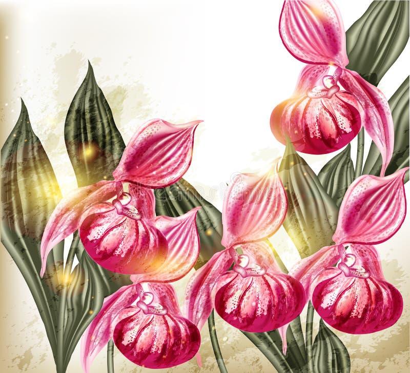 El fondo lindo del vector del grunge con la orquídea rosada realista florece stock de ilustración