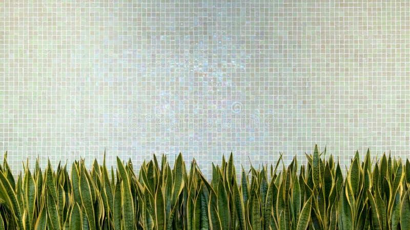 El fondo verde de textura de mosaico de la porcelana de la teja de la pared con verde sale de la planta decoración casera interio imagenes de archivo