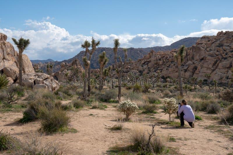 El fotógrafo de la mujer se arrodilla para tomar las fotos de un cactus del cholla en Joshua Tree National Park, llevando la rop fotografía de archivo libre de regalías