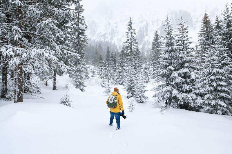 El fotógrafo está caminando en bosque del invierno foto de archivo libre de regalías