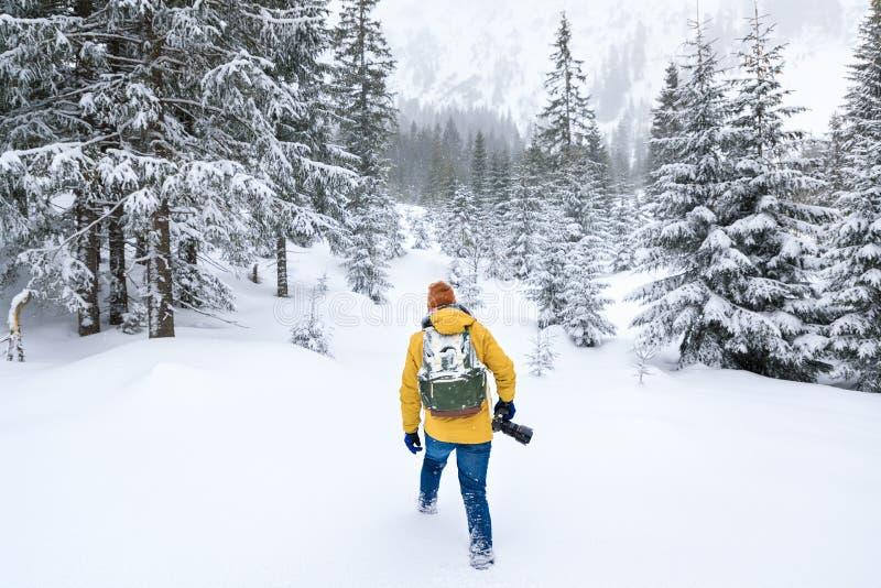 El fotógrafo está caminando en bosque del invierno imágenes de archivo libres de regalías
