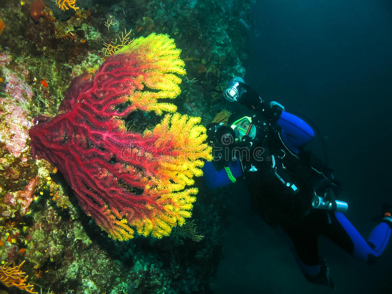 El fotógrafo subacuático está tomando la imagen de un coral fotos de archivo