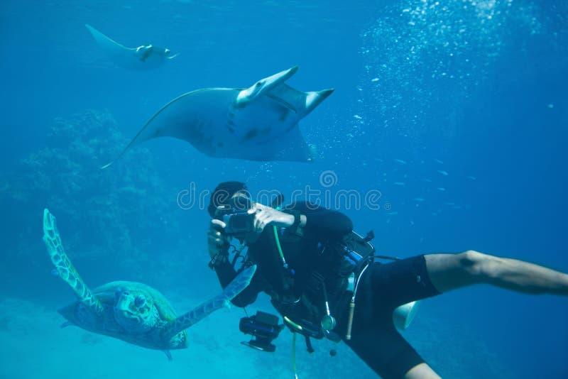 El fotógrafo subacuático toma las fotografías de una tortuga y de un pescado de la rampa en hábitat natural fotografía de archivo