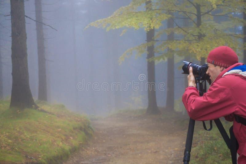 El fotógrafo toma imágenes del bosque mágico del otoño en una oscuridad imagen de archivo libre de regalías