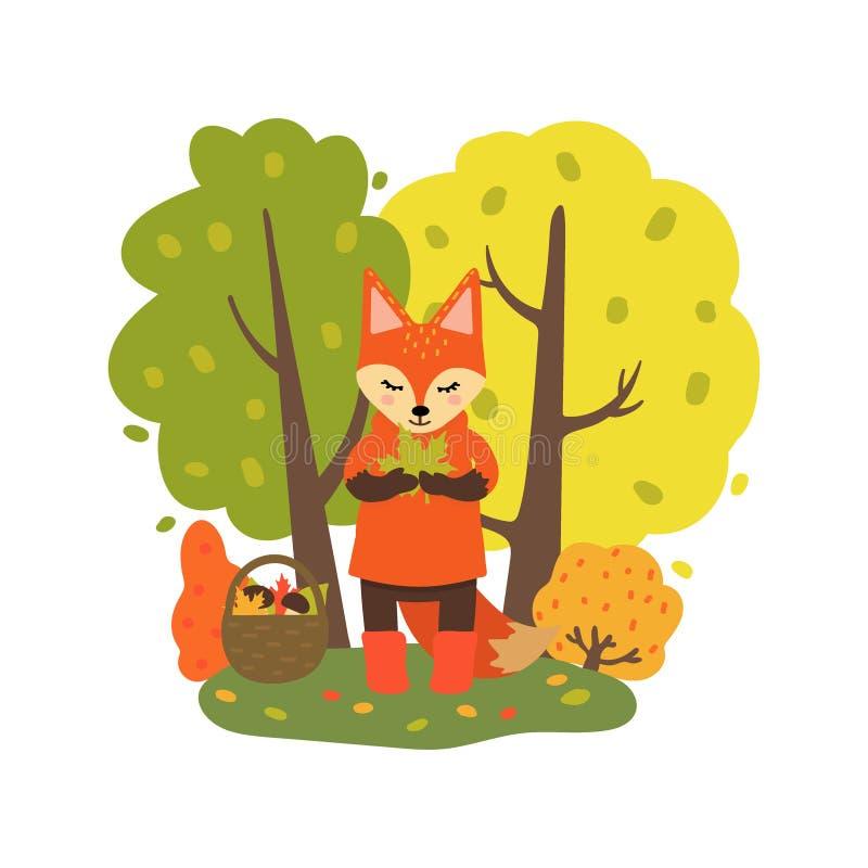 El Fox recolecta setas y las hojas en el carácter del bosque del otoño en estilo de la historieta aislado en el fondo blanco Vect stock de ilustración