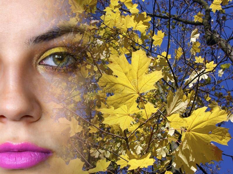 El fragmento de la cara de la chica joven está contra la perspectiva del cielo azul y de las hojas de otoño amarillas de un arce fotos de archivo libres de regalías