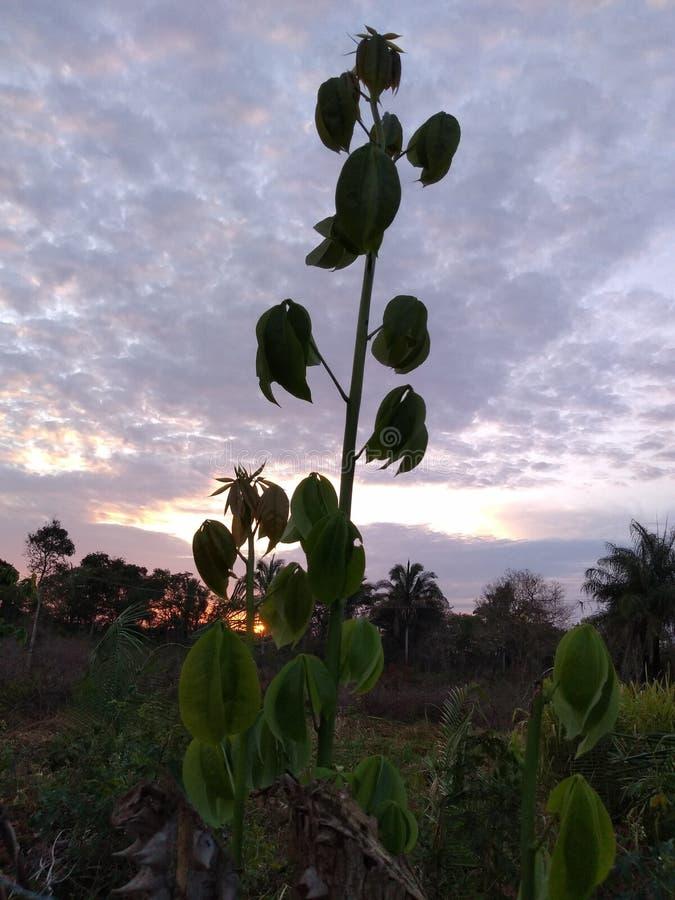 el frente del sol imagen de archivo libre de regalías
