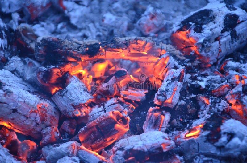 El fuego dentro del árbol fotos de archivo