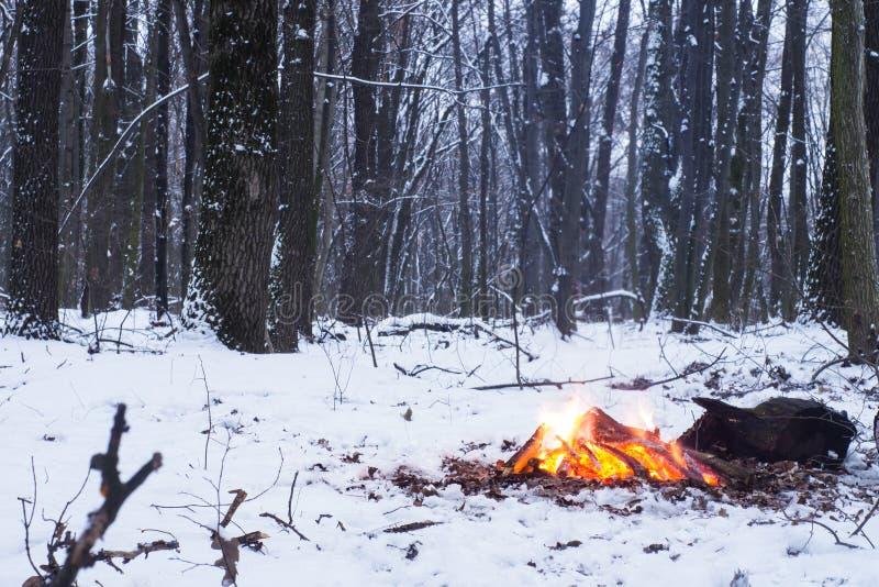 El fuego quema en la nieve en el bosque, en un fondo de árboles nevados foto de archivo