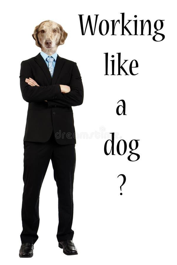 El funcionamiento divertido tiene gusto de un concepto del perro imagen de archivo