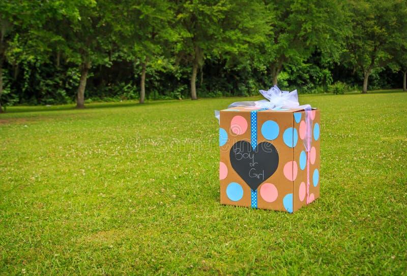 El género revela la caja del partido fotografía de archivo libre de regalías