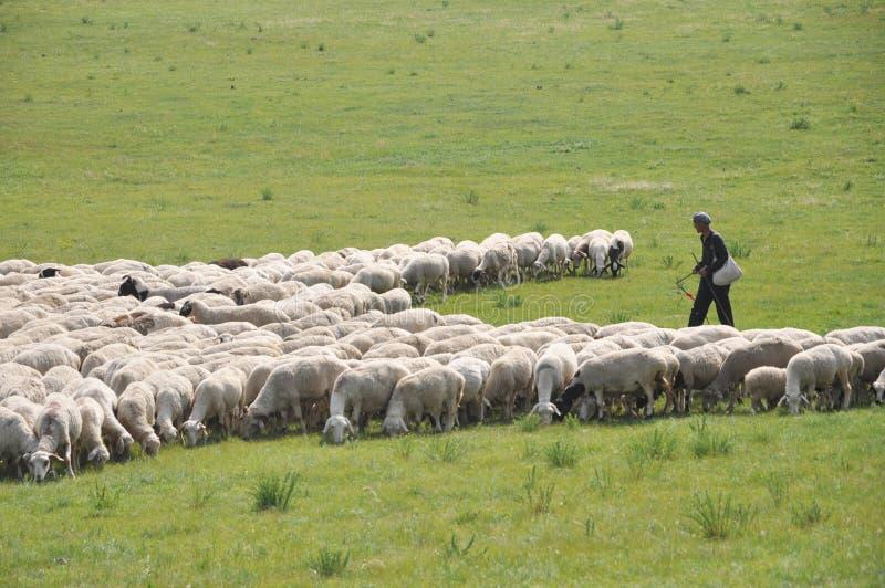 El ganadero y su multitud de las ovejas imagenes de archivo