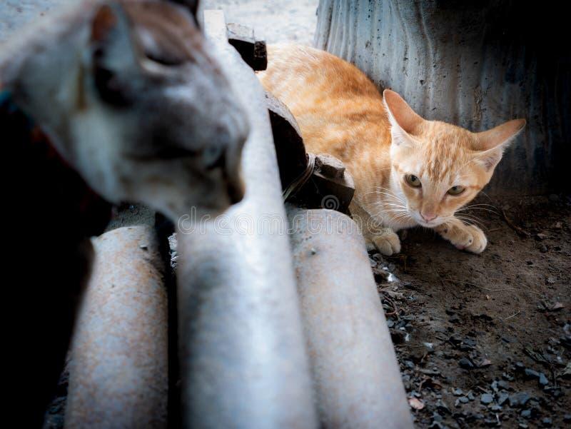 El gatito amarillo estaba listo para correr fotos de archivo