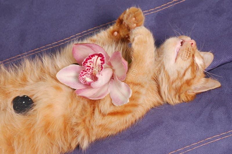 El Gatito Del Balneario Duerme Con La Flor Y Las Piedras Foto de archivo