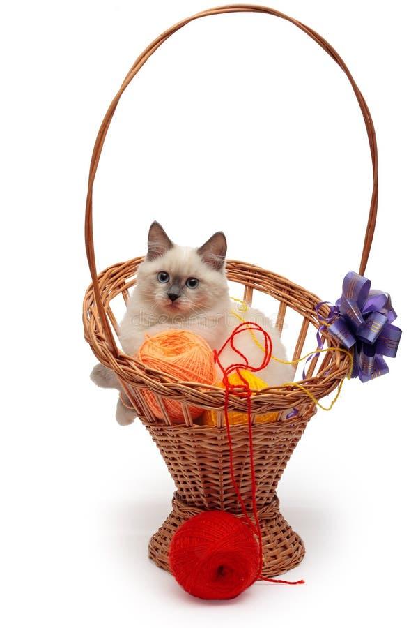 El gatito del gato de Neva Masquerade del siberiano miente en la cesta imágenes de archivo libres de regalías