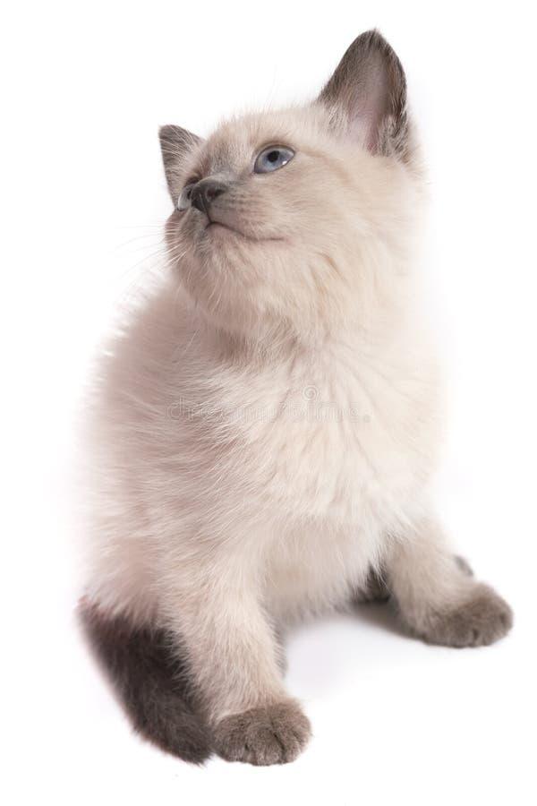 El gatito del punto del color se sienta en un fondo blanco imagenes de archivo