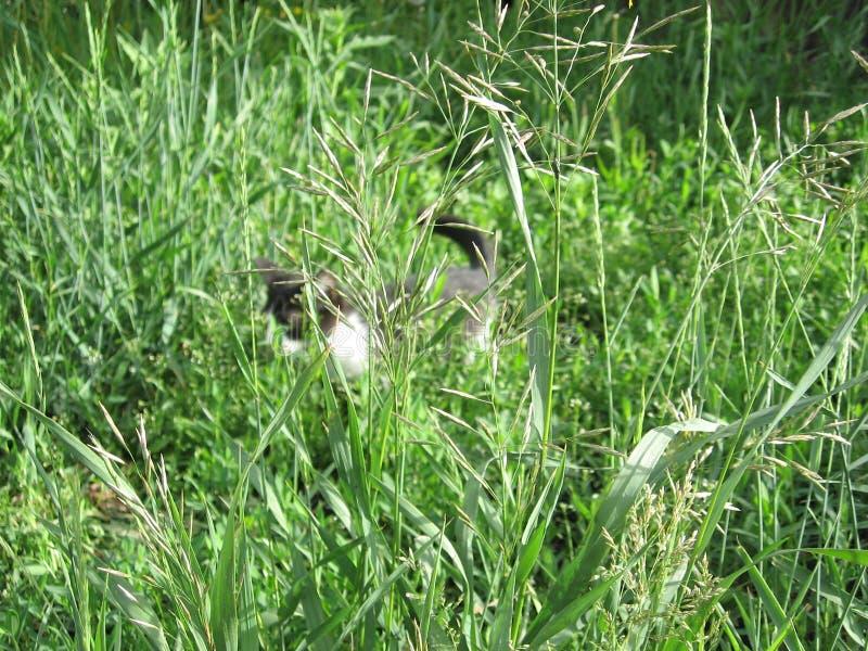 El gatito en la hierba fotos de archivo