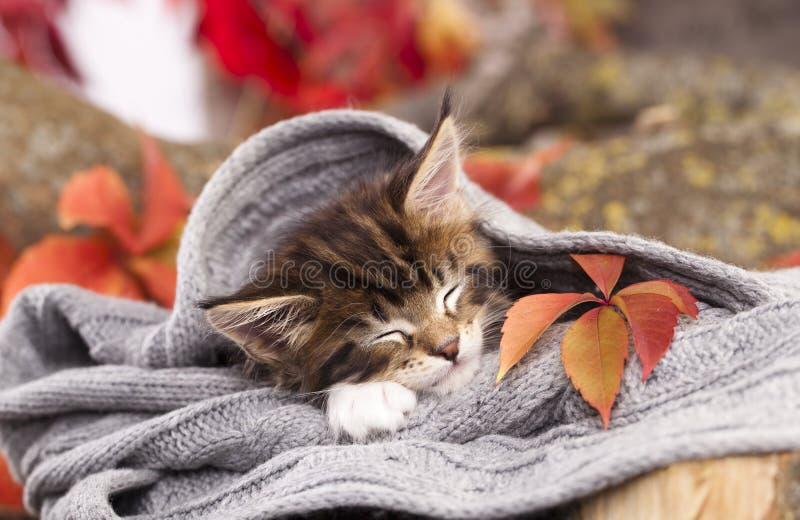 El gatito está durmiendo imagen de archivo