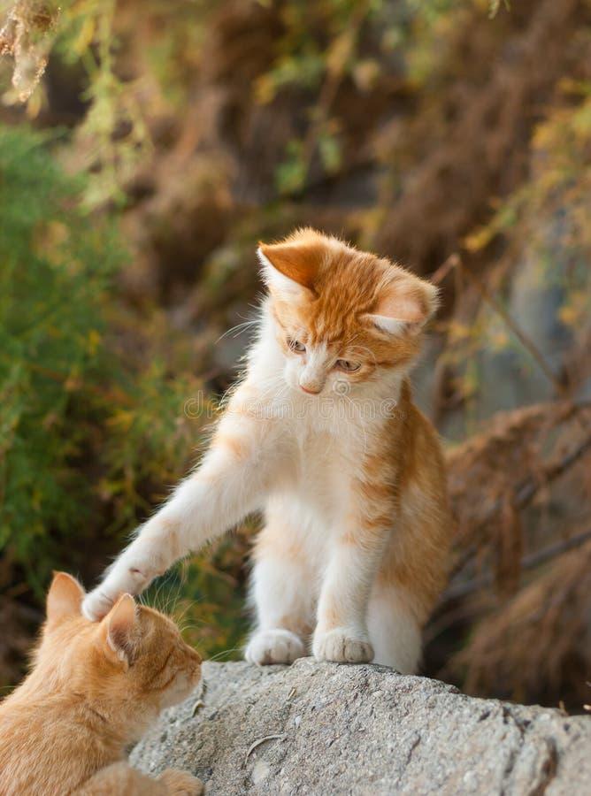 El gatito juguetón invita al amigo que se divierta imagen de archivo