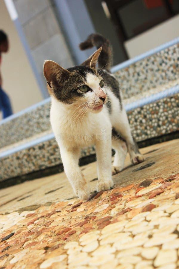 El gatito lindo curioso en jardín fotografía de archivo