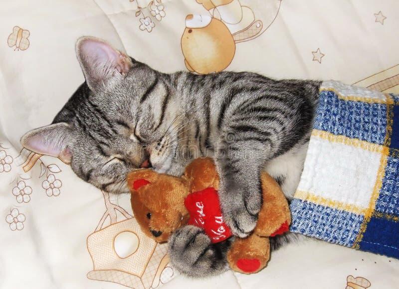 El gatito lindo el dormir imagen de archivo