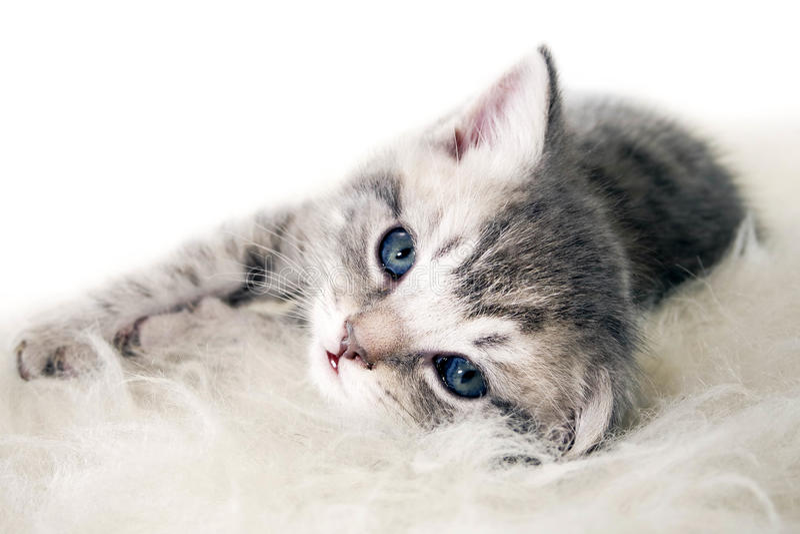 El gatito miente en un fondo blanco foto de archivo