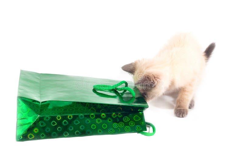 El gatito mira en el paquete del día de fiesta foto de archivo