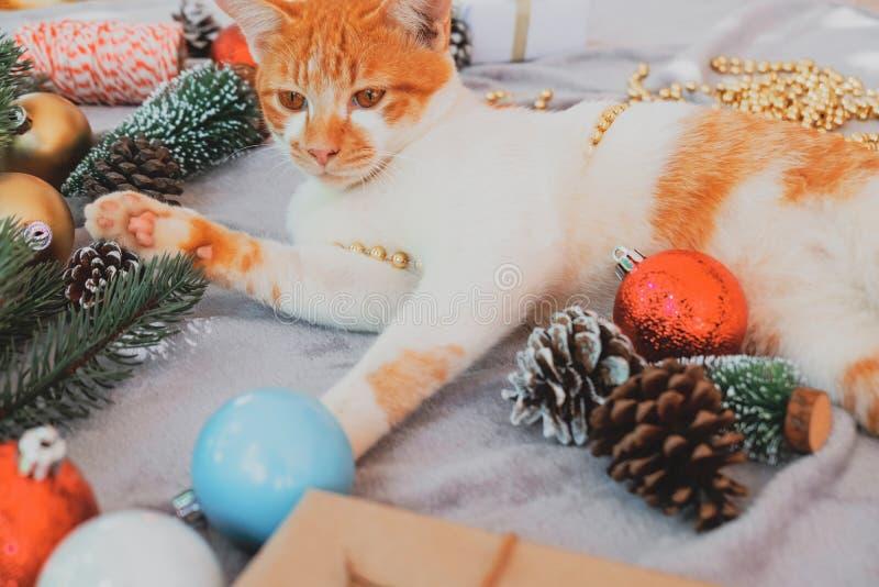El gatito mira para arriba en la alfombra en día de fiesta de la Navidad con la decoración y el ornamento imágenes de archivo libres de regalías