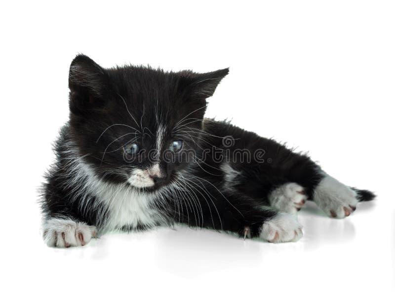 El gatito mullido blanco y negro miente en un fondo blanco fotos de archivo libres de regalías