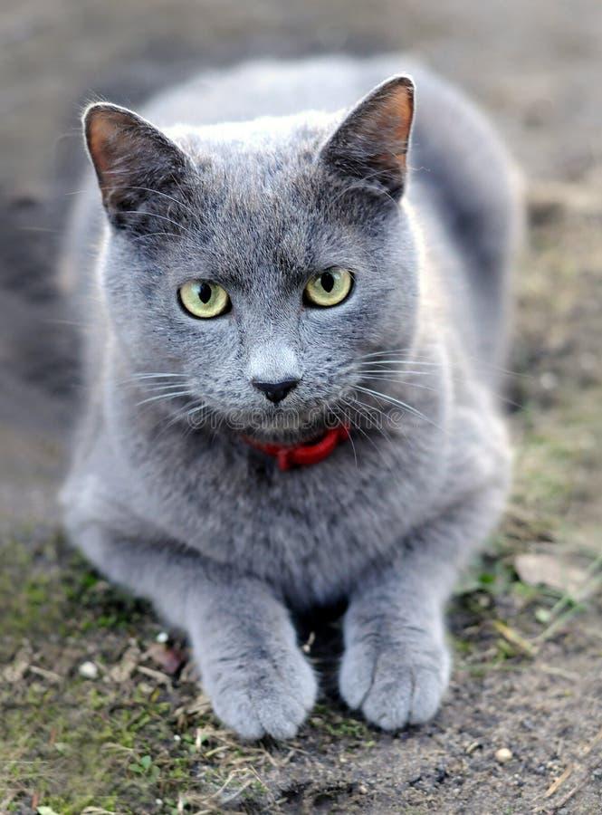 El gato fotografía de archivo