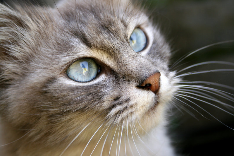 El gato imagen de archivo