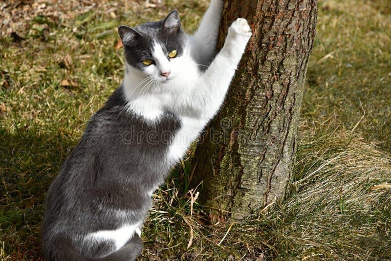 El gato afila garras en árbol imagen de archivo