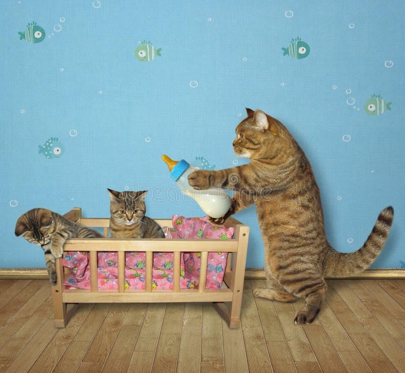 El gato alimenta los gatitos foto de archivo libre de regalías