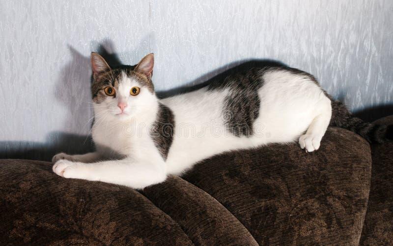 El gato blanco con los puntos que mienten encendido apoya del sofá imagen de archivo libre de regalías