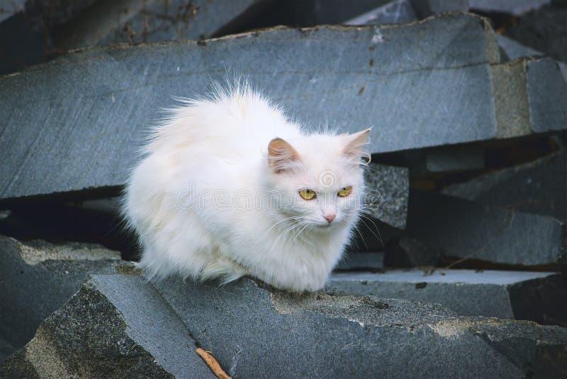 El gato blanco miente en las piedras fotografía de archivo