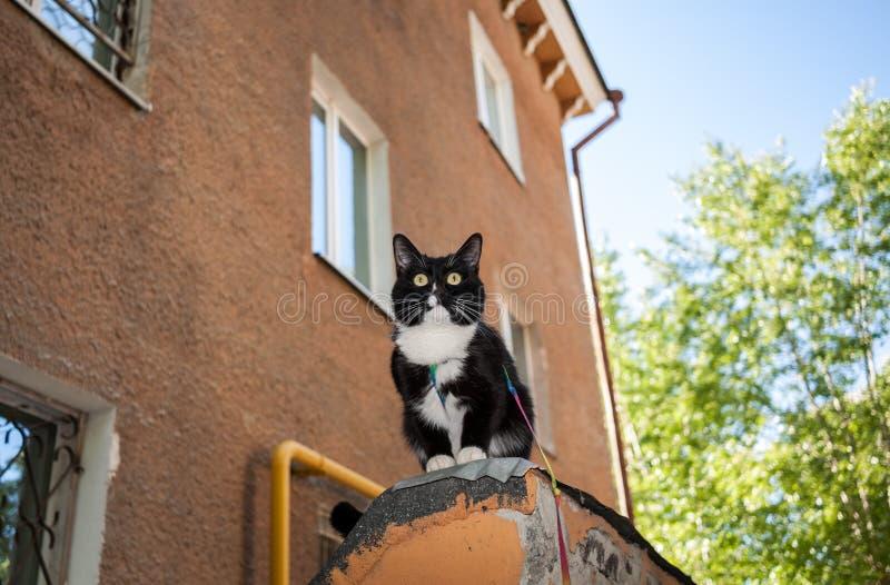 El gato blanco y negro con el arnés se está sentando en la repisa de hous viejo imagen de archivo
