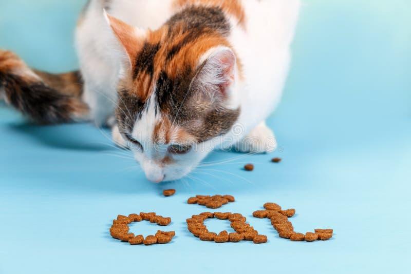 El gato come la comida seca fotos de archivo