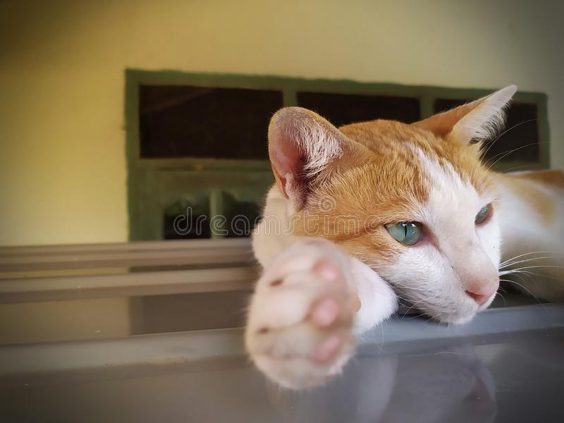 El gato de gato atigrado del jengibre coloca en el tejado del coche imagen de archivo libre de regalías